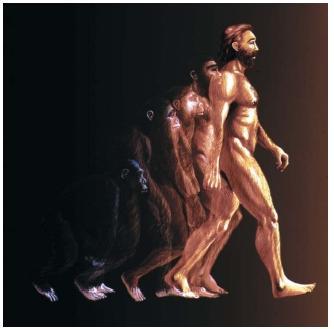 Teoria da evolução do Humana.