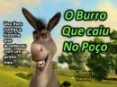 burro_caiu_no_posso