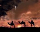 Natal_noite_reis_magos_camelos_Estrela_Belem (6)