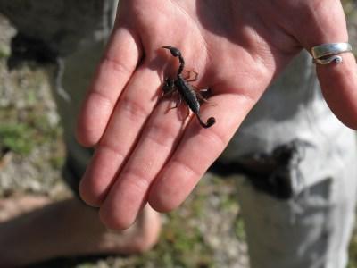 Escorpião na mao