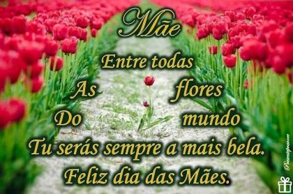 A_mãe_mais_bela