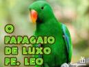 o_papagaio_na_gaiola_de_luxo