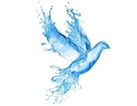 Pomba_agua_viva