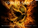 Pomba_branca_repres_Espirito_santo (10)
