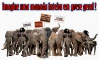 Manad_elefante_greve_geral