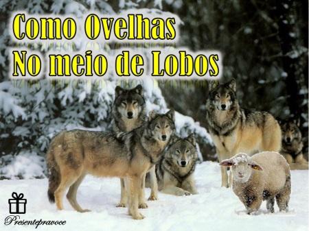 Como_ovelhas_no_meio_de_lobos