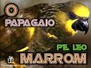 O-papagaio_marrom_padre_leo