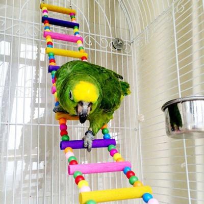 papagaio_escada_balanco_espelho_padre_leo